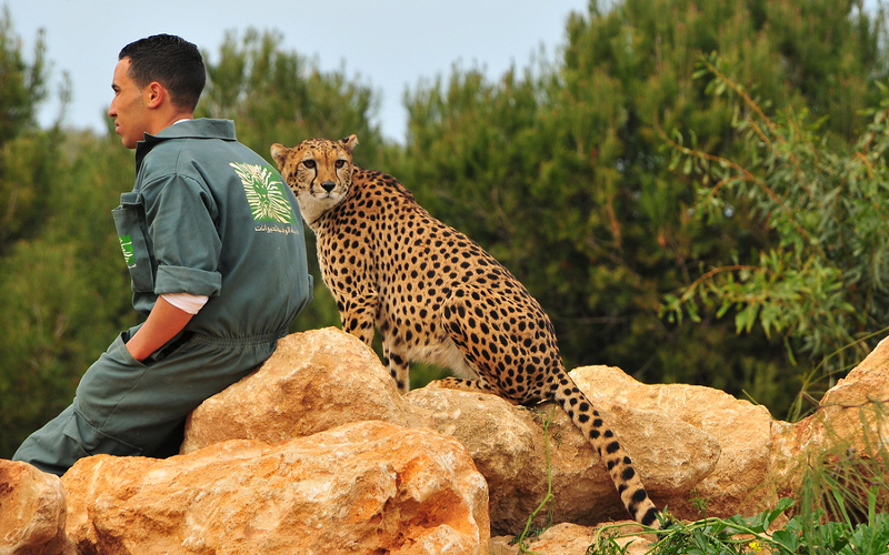 rabat til Odense Zoo waxing ringsted